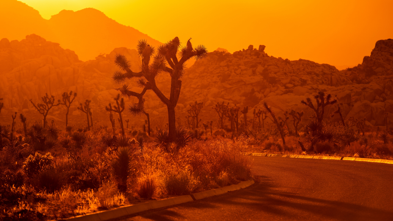 Joshua Tree Camping Guide with Video Tours