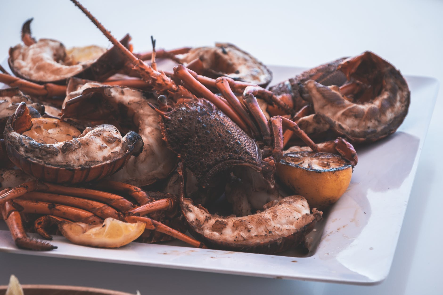 appetizing roasted lobsters served on plate in restaurant